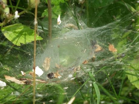 webbby